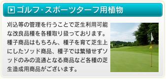 ゴルフ・スポーツターフ用植物