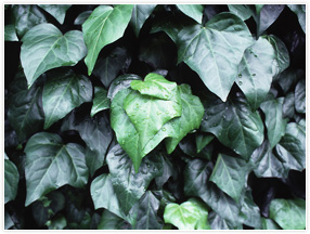 環境緑化関係