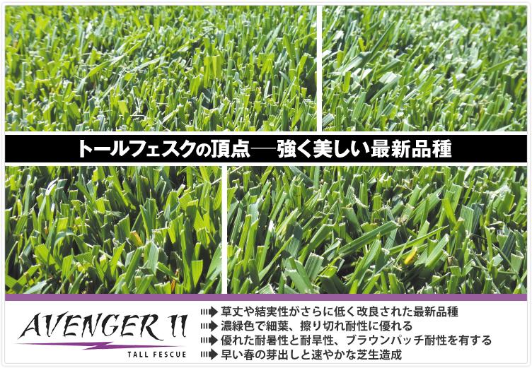アベンジャー,アベンジャー2,トールフェスクの頂点。強く美しい最新品種品種,擦り切れ耐性,エンドファイト
